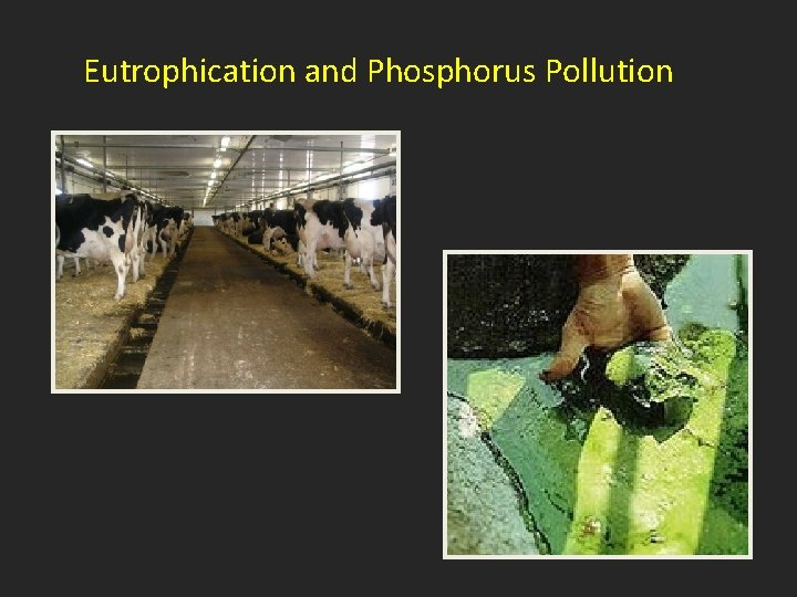 Eutrophication and Phosphorus Pollution