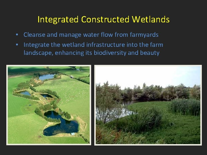 Integrated Constructed Wetlands • Cleanse and manage water flow from farmyards • Integrate the