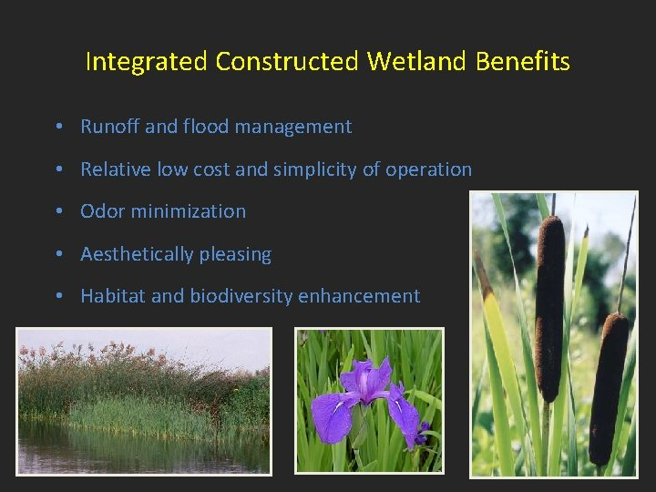 Integrated Constructed Wetland Benefits • Runoff and flood management • Relative low cost and
