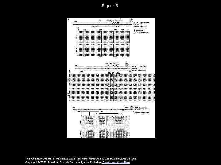 Figure 5 The American Journal of Pathology 2006 1691550 -1566 DOI: (10. 2353/ajpath. 2006.