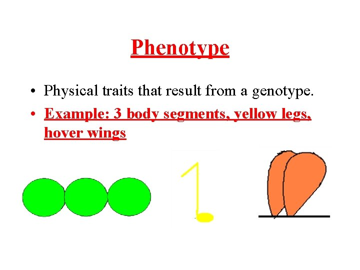 Phenotype • Physical traits that result from a genotype. • Example: 3 body segments,