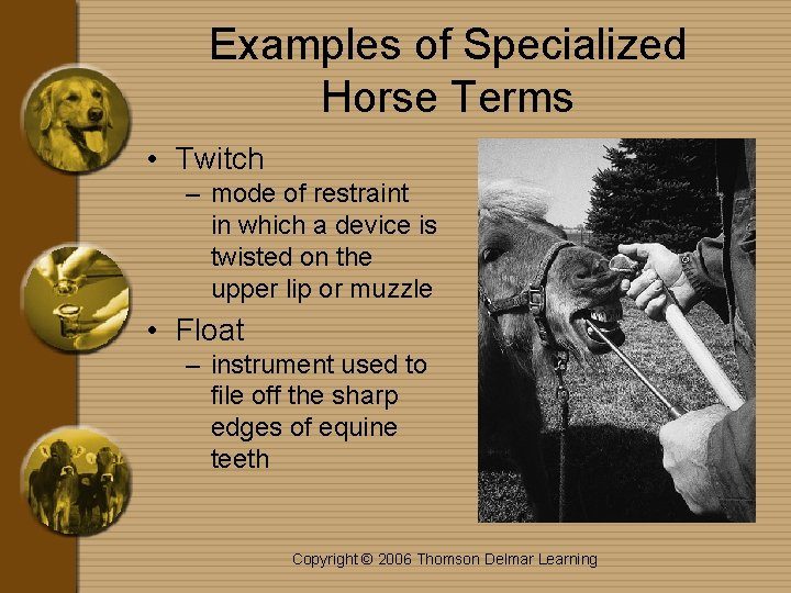 Examples of Specialized Horse Terms • Twitch – mode of restraint in which a