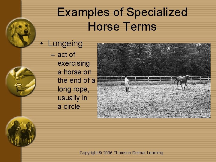 Examples of Specialized Horse Terms • Longeing – act of exercising a horse on