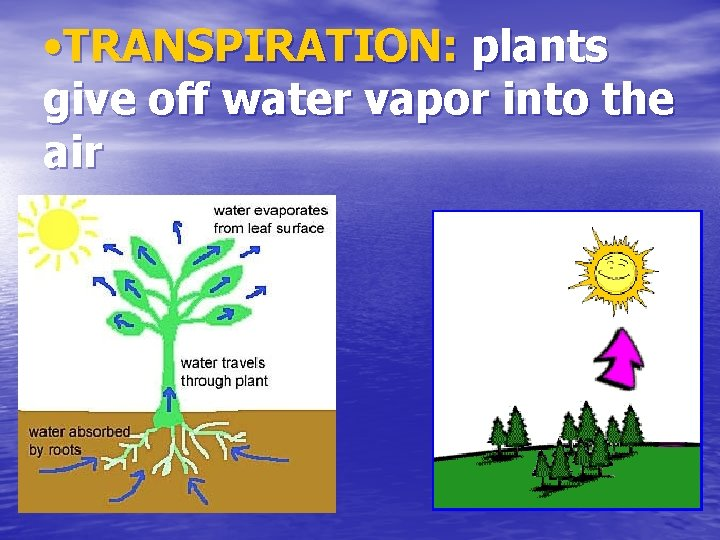 • TRANSPIRATION: plants give off water vapor into the air