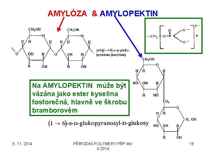 AMYLÓZA & AMYLOPEKTIN Na AMYLOPEKTIN může být vázána jako ester kyselina fosforečná, hlavně ve