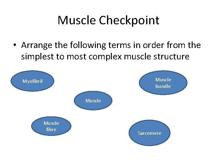 Muscle Checkpoint • Arrange the following terms in order from the simplest to most