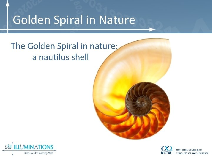 Golden Spiral in Nature The Golden Spiral in nature: a nautilus shell