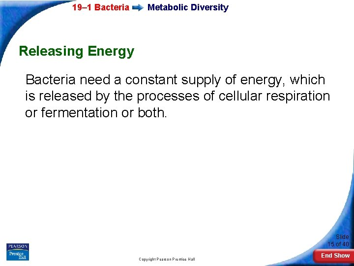 19– 1 Bacteria Metabolic Diversity Releasing Energy Bacteria need a constant supply of energy,