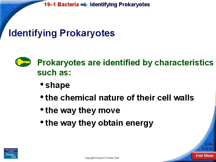 19– 1 Bacteria Identifying Prokaryotes are identified by characteristics such as: • shape •