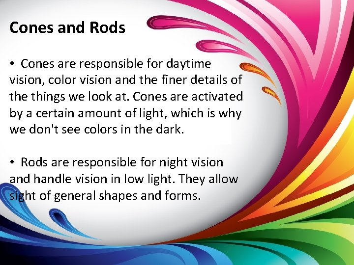 Cones and Rods • Cones are responsible for daytime vision, color vision and the