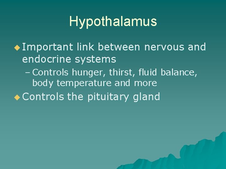 Hypothalamus u Important link between nervous and endocrine systems – Controls hunger, thirst, fluid