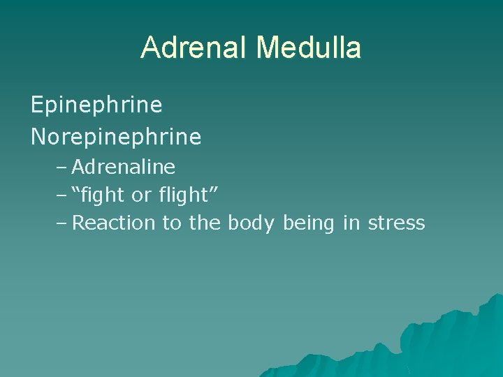 """Adrenal Medulla Epinephrine Norepinephrine – Adrenaline – """"fight or flight"""" – Reaction to the"""