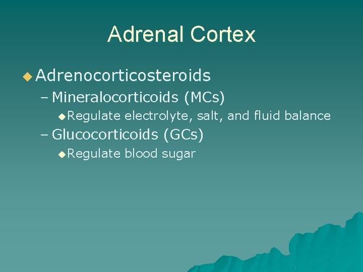Adrenal Cortex u Adrenocorticosteroids – Mineralocorticoids (MCs) u Regulate electrolyte, salt, and fluid balance