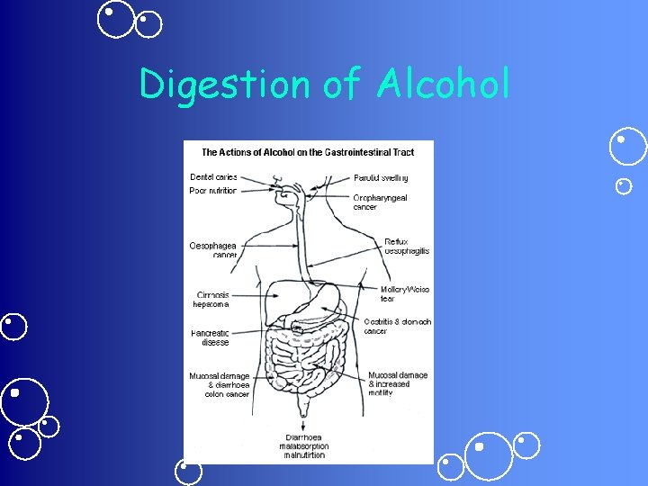 Digestion of Alcohol