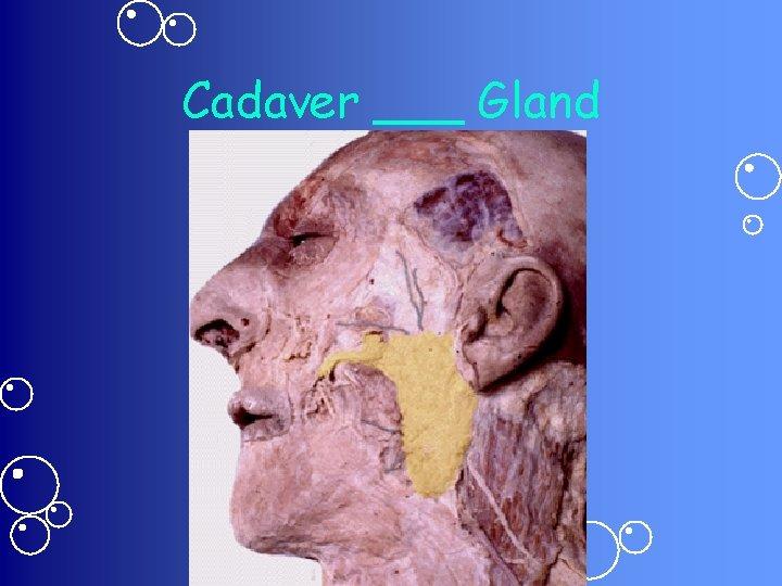Cadaver ___ Gland