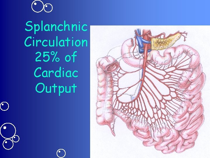 Splanchnic Circulation 25% of Cardiac Output