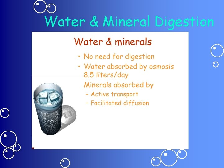 Water & Mineral Digestion