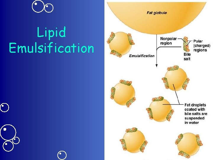 Lipid Emulsification