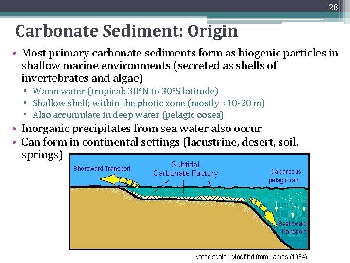 28 Carbonate Sediment: Origin • Most primary carbonate sediments form as biogenic particles in