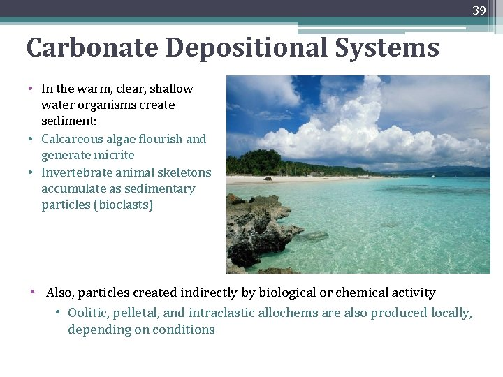 39 Carbonate Depositional Systems • In the warm, clear, shallow water organisms create sediment:
