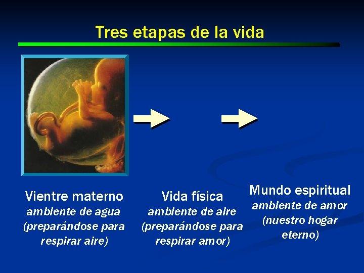 Tres etapas de la vida Vientre materno ambiente de agua (preparándose para respirar aire)