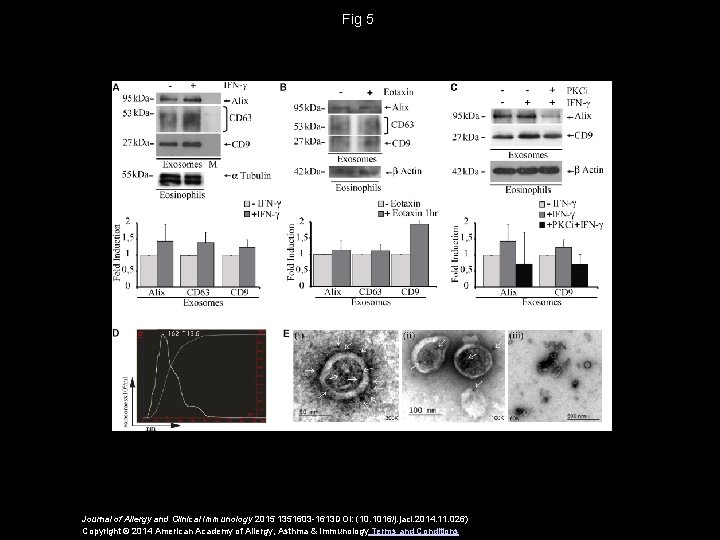 Fig 5 Journal of Allergy and Clinical Immunology 2015 1351603 -1613 DOI: (10. 1016/j.