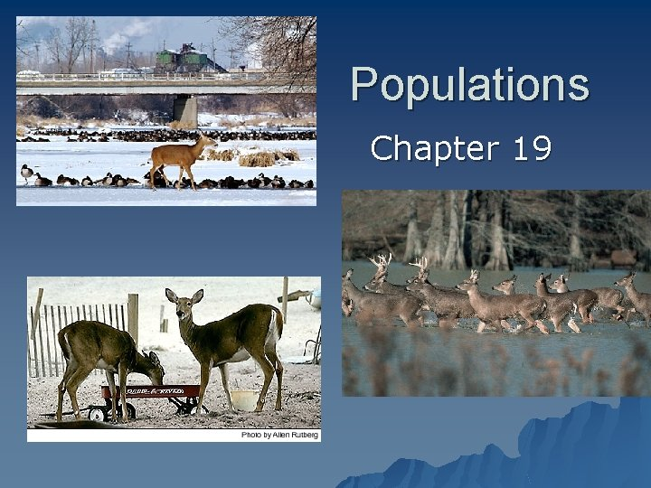 Populations Chapter 19