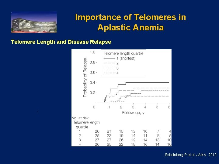 Importance of Telomeres in Aplastic Anemia Telomere Length and Disease Relapse . Scheinberg P