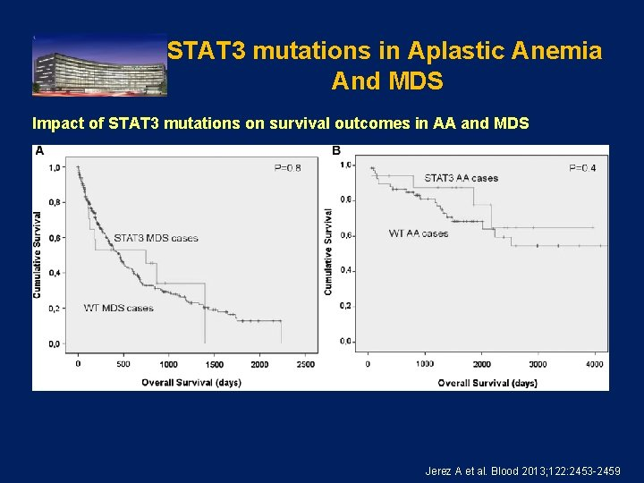 STAT 3 mutations in Aplastic Anemia And MDS Impact of STAT 3 mutations on