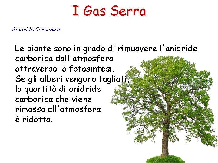 I Gas Serra Anidride Carbonica Le piante sono in grado di rimuovere l'anidride carbonica