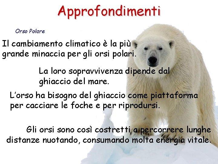 Approfondimenti Orso Polare Il cambiamento climatico è la più grande minaccia per gli orsi