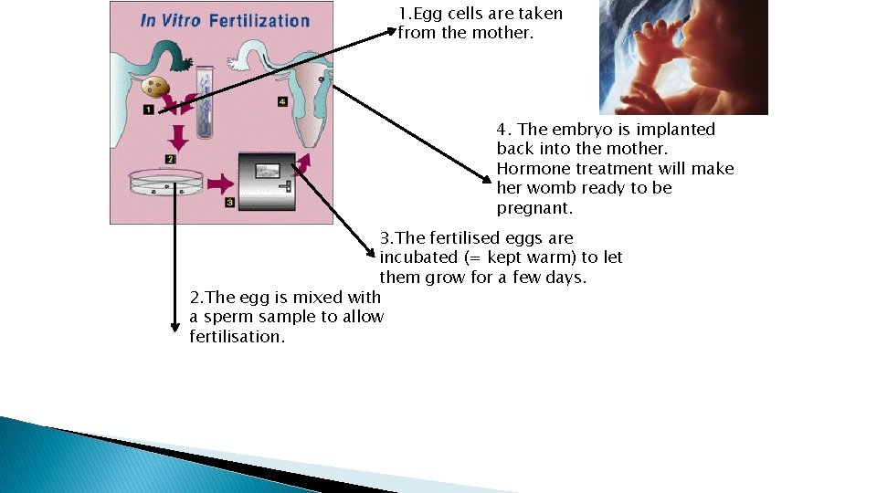 1. Egg cells are taken from the mother. 4. The embryo is implanted back