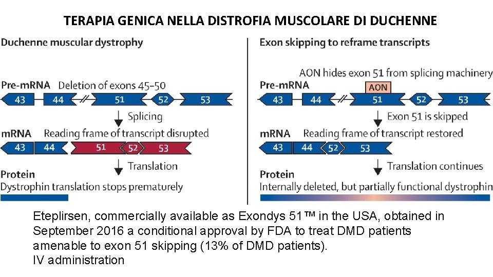 TERAPIA GENICA NELLA DISTROFIA MUSCOLARE DI DUCHENNE Eteplirsen, commercially available as Exondys 51™ in