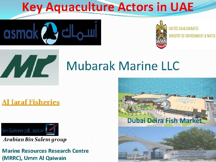Key Aquaculture Actors in UAE Al Jaraf Fisheries Marine Resources Research Centre (MRRC), Umm