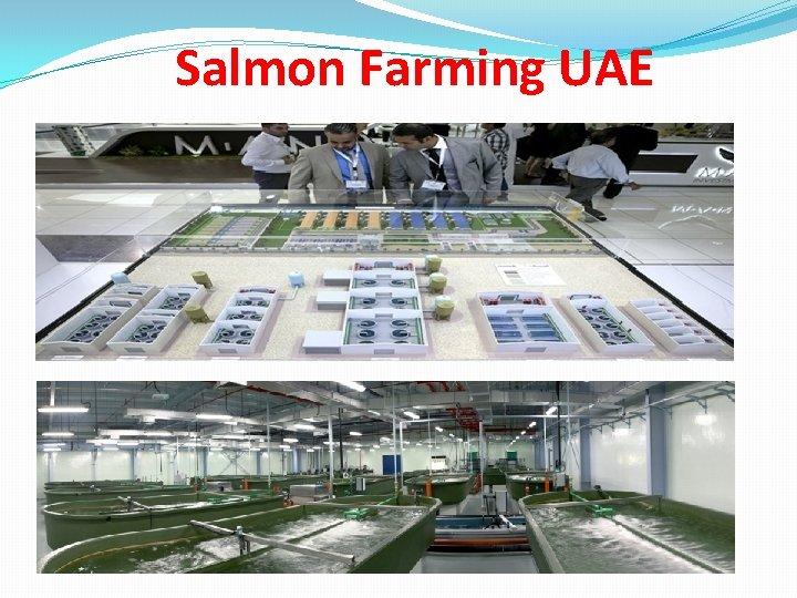 Salmon Farming UAE