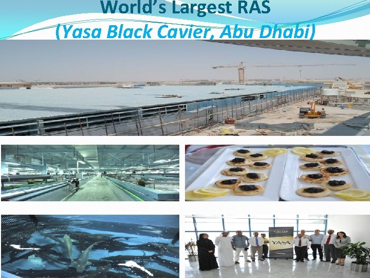 World's Largest RAS (Yasa Black Cavier, Abu Dhabi)