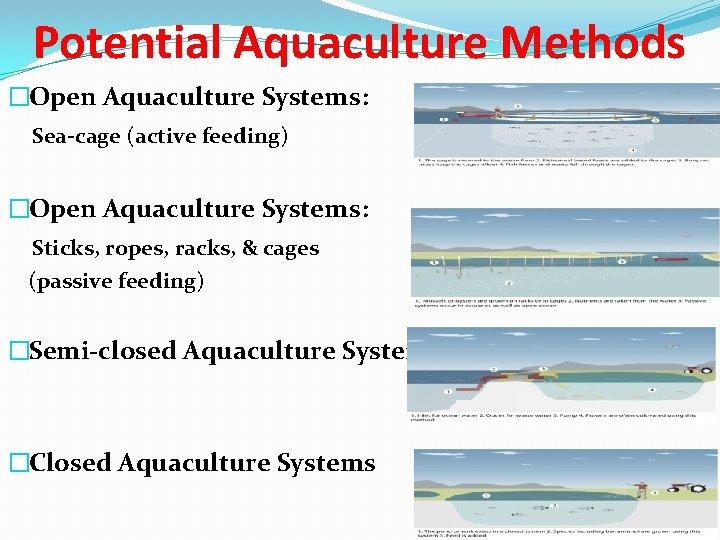 Potential Aquaculture Methods �Open Aquaculture Systems: Sea-cage (active feeding) �Open Aquaculture Systems: Sticks, ropes,