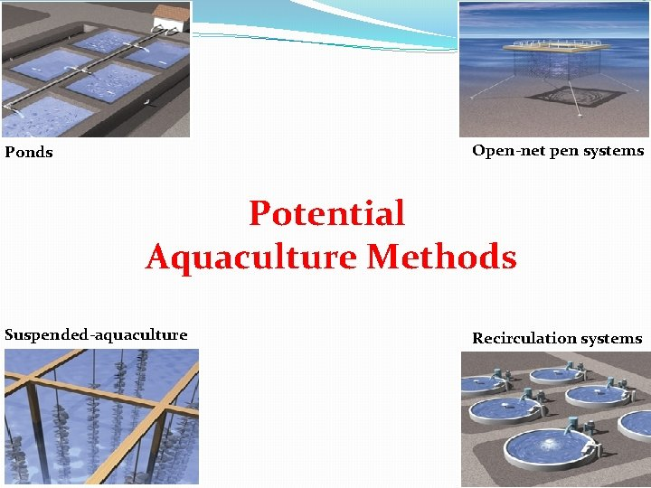 Open-net pen systems Ponds Potential Aquaculture Methods Suspended-aquaculture Recirculation systems
