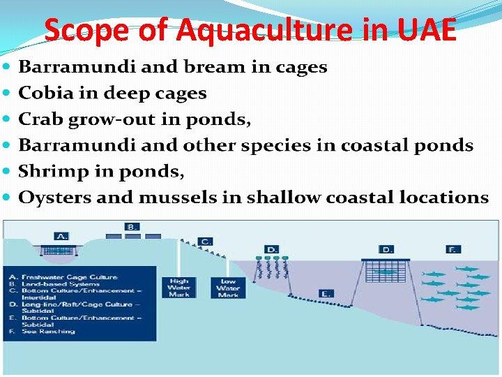 Scope of Aquaculture in UAE