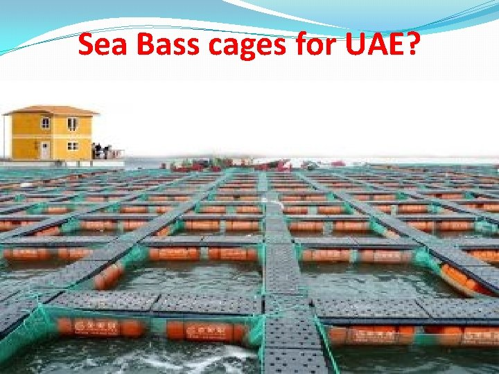 Sea Bass cages for UAE?