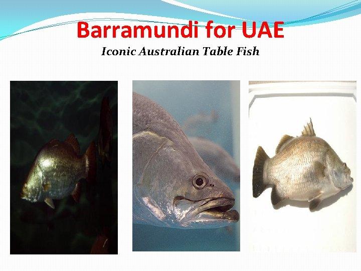 Barramundi for UAE Iconic Australian Table Fish