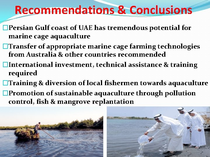 Recommendations & Conclusions �Persian Gulf coast of UAE has tremendous potential for marine cage