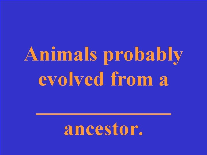Animals probably evolved from a _______ ancestor.