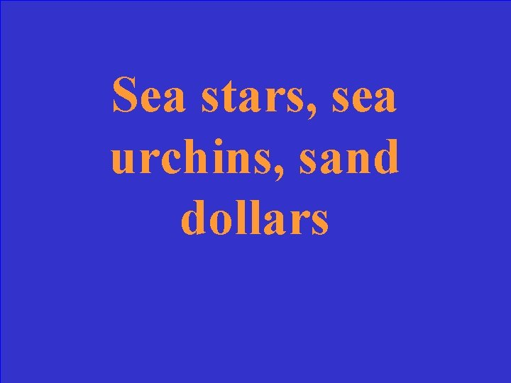 Sea stars, sea urchins, sand dollars
