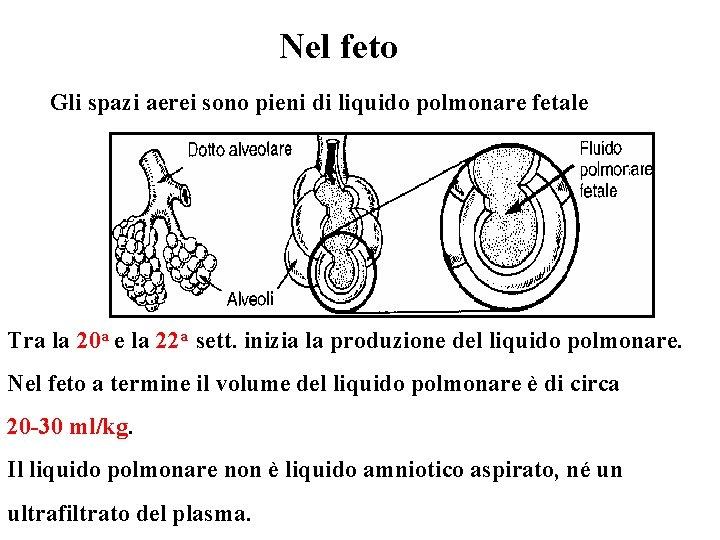 Nel feto Gli spazi aerei sono pieni di liquido polmonare fetale Tra la 20