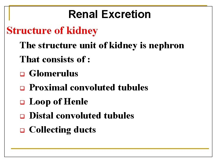 Renal Excretion Structure of kidney The structure unit of kidney is nephron That consists