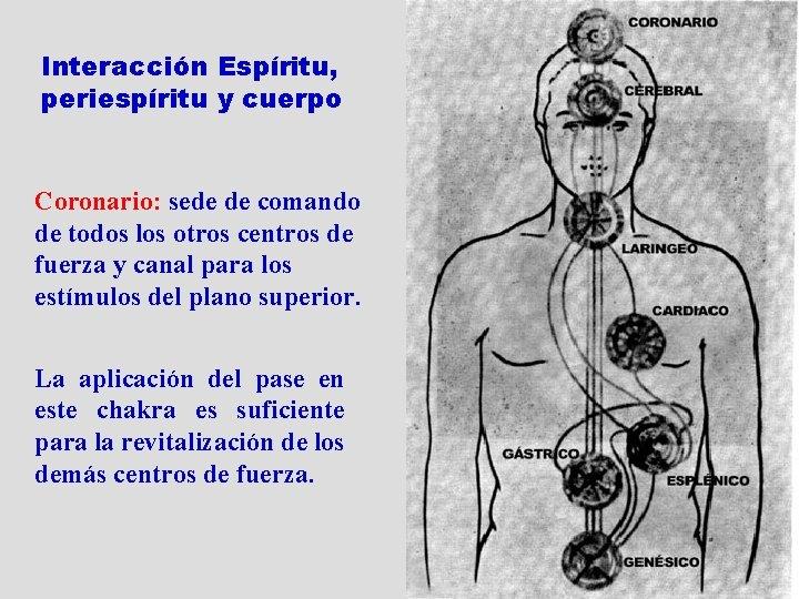 Interacción Espíritu, periespíritu y cuerpo Coronario: sede de comando de todos los otros centros
