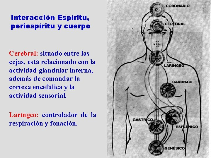 Interacción Espíritu, periespíritu y cuerpo Cerebral: situado entre las cejas, está relacionado con la