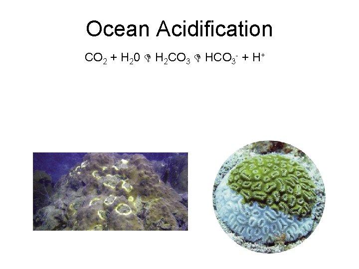 Ocean Acidification CO 2 + H 20 H 2 CO 3 HCO 3 -