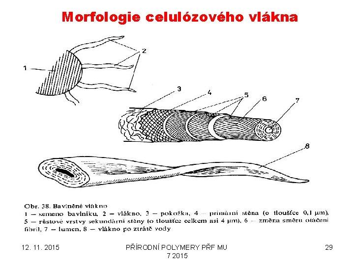 Morfologie celulózového vlákna 12. 11. 2015 PŘÍRODNÍ POLYMERY PŘF MU 7 2015 29